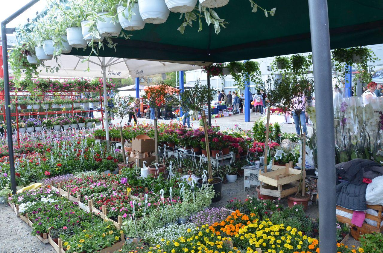 Sajam hortikulture, od 29. do 31. maja!